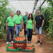 International Greenhouse Tomato Programme